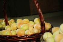 The export of Armenian apricot from the Ararat valley justifies all the expectations