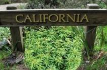 В Калифорнии хотят легализовать марихуану