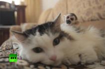 В Тюмени домашняя кошка заменила брошенной обезьянке маму (Видео)