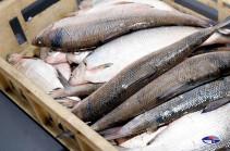 Առգրավվել է 56 կգ «սիգ» տեսակի տիրազուրկ թարմ ձուկ