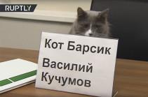 Բարսիկ անունով կատվին Պերմի շինարարական ընկերություններից մեկն աշխատանքի է վերցրել (Տեսանյութ)