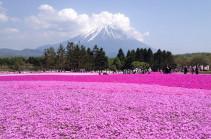 Ճապոնիայում ջերմ եղանակի պատճառով ծաղկել է սակուրան