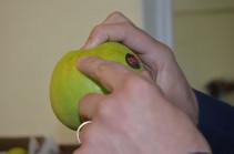 ՍԱՊԾ-ն ու ՊԵԿ-ը համատեղ փորձում են պարզել՝ որտեղից և ով է Հայաստան ներկրել ադրբեջանական խնձորներ (Տեսանյութ)