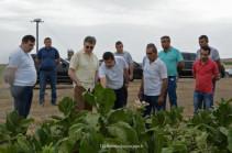 Կարեն Կարապետյանը խոստացել է Արցախի սահմանամերձ գոտիներում 200 հա նռան այգի հիմնել