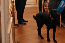 Մակրոնի շունը կարիքները հոգացել է Ելիսեյան պալատում` նախագահի խորհրդակցության ժամանակ (Տեսանյութ)