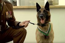 В Британии собаку наградили за мужество во время операции в Кабуле