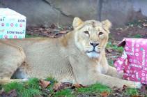 Լոնդոնյան կենդանաբանական այգում կենդանիները տոնում են Ամանորը