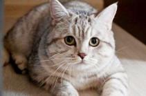 La Stampa: в Италии женщина завещала €30 тыс. своему коту