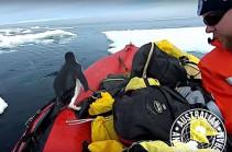 Любопытный пингвин вынырнул из воды и нагло заскочил в лодку (Видео)