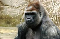 Россельхознадзор ошибся: запрету на ввоз в РФ из Армении подлежат только животные из отряда приматов