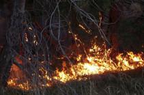 Африканская жара вызвала в Португалии волну пожаров (Видео)