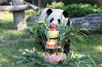 Первая панда Франции празднует день рождения (Видео)