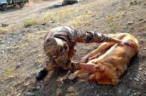 A dog in Artsakh frontline shot by Azerbaijani side