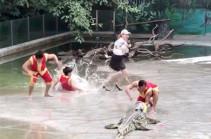 Дрессировщик свалился в пруд с крокодилами во время шоу