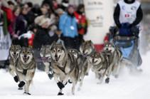 Гонка на собачьих упряжках в Альпах