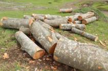 Բենզասղոցով Հաղարծինում ծառեր են հատել