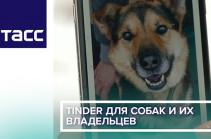 Tinder для собак и их владельцев