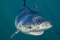 Акула напала на человека в Австралии