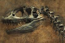 В Аргентине нашли останки динозавров возрастом 220 млн лет (Видео)