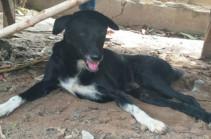 Թաիլանդում շունը փրկել է ողջ-ողջ թաղված նորածնին