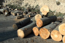 Քաղաքացին ապօրինի հատել է 4 ծառ և օգտագործել տան ջեռուցման համար