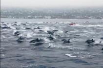 Огромная стая счастливых дельфинов (Видео)
