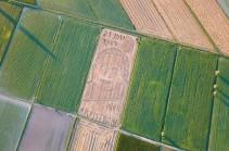 Ցորենի արտում ստեղծել են Նիլ Արմսթրոնգի դիմանկարը (Տեսանյութ)