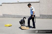 ՊԵԿ մաքսանենգության դեմ պայքարի վարչության շնագիտական բաժնի վարժեցված շների մեկ օրը (Տեսանյութ)
