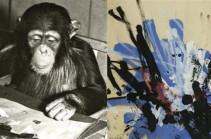 Կոնգո, շիմպանզե և նկարիչ (Տեսանյութ)