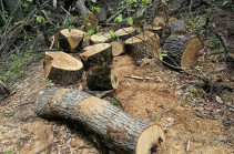 Լոռու մարզում ապօրինի անտառահատման համար այս տարվա առաջին 9 ամիսներին 41.6 տոկոսով ավելի մարդ է դատապարտվել, քան ողջ 2018թ. ընթացքում