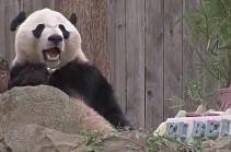 Панду Бэй Бэя торжественно провожают из Вашингтона в Китай (Видео)