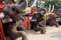 Банкет для слонов в Таиланде (Видео)