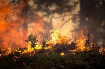 Красный уровень опасности объявили в Чили из-за природных пожаров