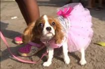 Նիգերիայում անցկացվել է շների կառնավալ (Տեսանյութ)
