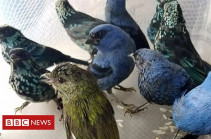 Man arrested in Peru airport with 20 birds in suitcase
