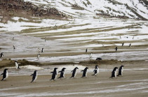 Antarctic island hits record temperature of 20.75C