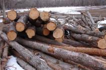 «Դիլիջանի ազգային պարկ»-ի տարբեր տեղամասերում ապօրինի հատված 257 ծառ է հայտնաբերվել