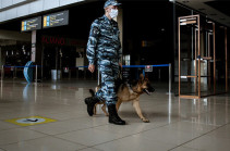 В ОАЭ начали использовать собак для выявления COVID-19 у людей