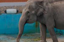 Американский суд рассмотрит первый в истории иск слонихи против зоопарка