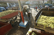 Никол Пашинян призывает виноградарей объединиться и создать ассоциацию