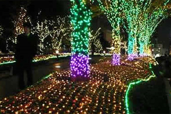 Trees in Yerevan will be illuminated