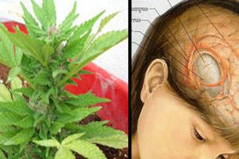 Конопля последствия от курения преимущества марихуаны