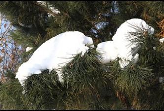 Синоптики 20-24 декабря обещают жителям Армении погоду без осадков