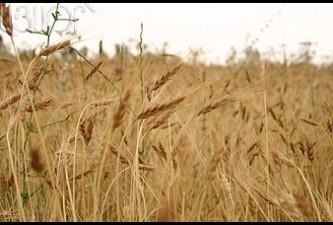 Ցորենի ինքաբավության բարձրացում, ջերմոցների բուռն աճ՝ գյուղատնտեսությունն անցյալ տարի