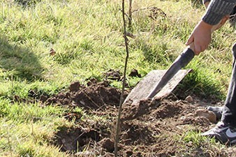 Fall for Armenia tree project