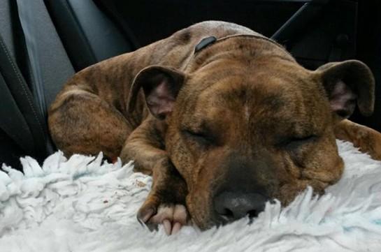 Самая одинокая собачка Англии снимется вновых «Трансформерах»