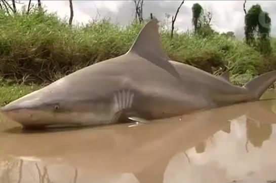 ВАвстралии мощнейший циклон вынес акулу напроезжую часть
