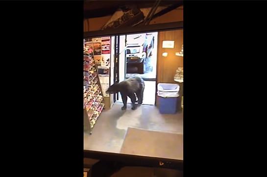 На Аляске медведь зашел в магазин и стал рассматривать стенд с конфетами