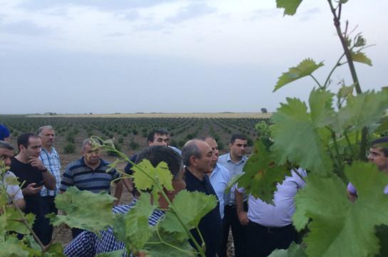 Тигран Абрамян: В Арцахе увеличивается площадь гранатовых садов