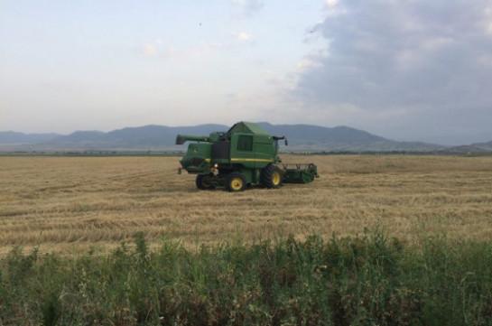 Урожай зерна в Арцахе в 2017 году составляет около 160-165 тыс. тонн